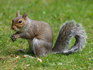 Squirrel-508x381